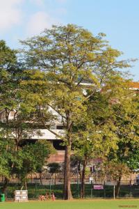 Tall_Tree